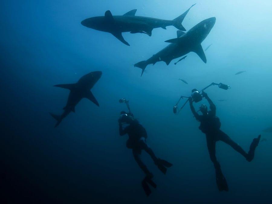 fiji diving beqa lagoon