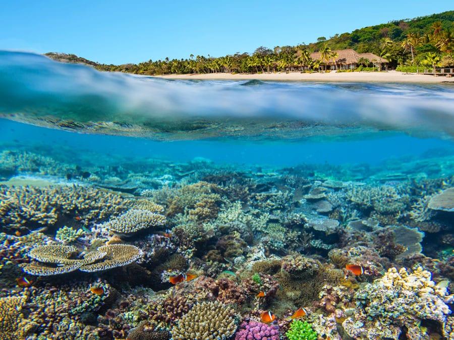 luxury dive holidays fiji